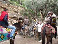 Balade en mules