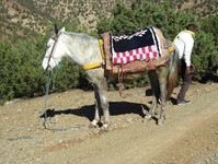 2ème balade en mules